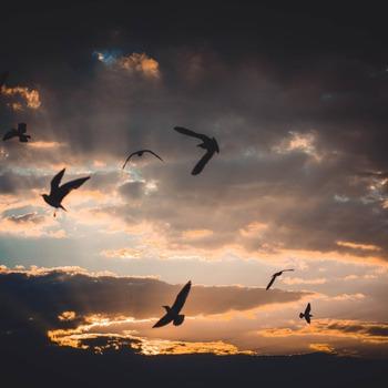 Birds Zdjęcie autorstwa Irina Iriser z Pexels pexels-photo-721993.jpeg